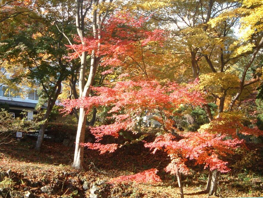 ◆庭_ミニさんぽ道_11紅葉1